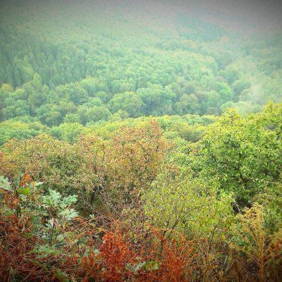Rheinsteig Herbst
