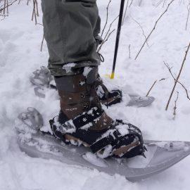 Auf Schneeschuhen durchs Hohe Venn